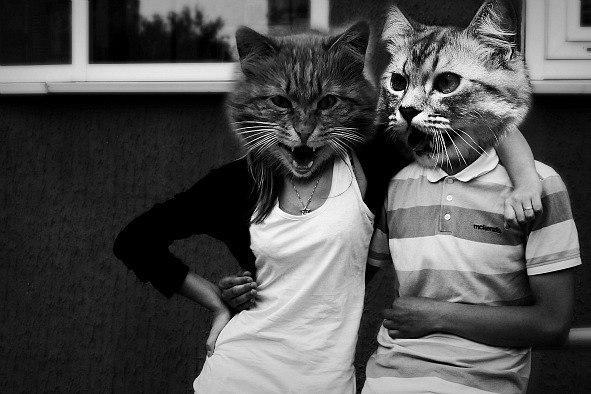 Как называется программа где можно вставить место лица морду кота?