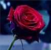 RoseMadder