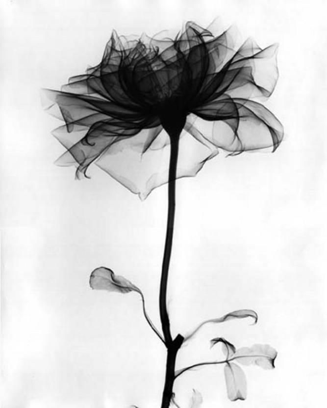 черный цветок картинка:
