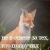 Кайя Нори