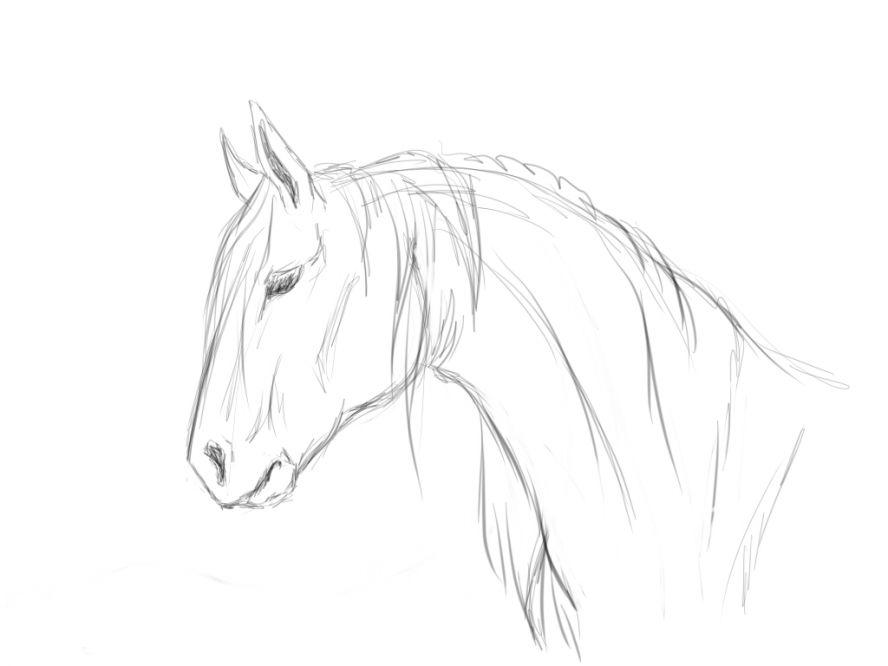 лошадь нарисованные картинки
