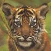 tigerrr_cub