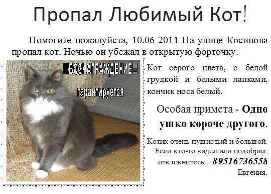 объявления о пропажи кота фото