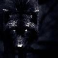 Ferus Canis