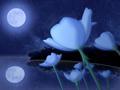 La fleur de lune