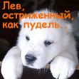 Волкодав Котик