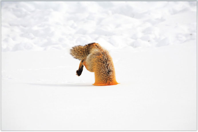 Животные зима фото обсуждение на
