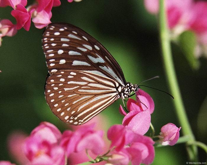 Цветы для бабочек являются и рестораном, и домом, и идеальным фоном.