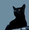 Pinka Cat