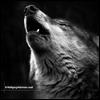Волчезара