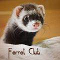 Ferret Club