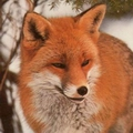 fox agent