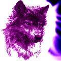 -=Dark_wolf=-