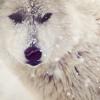 Antarcti