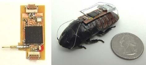Таракан с радиоуправлением