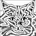 goblincat