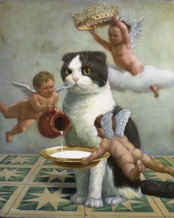 20 гифок с котиками , идеально описывающими твою жизнь