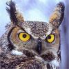 Owl Chess