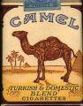 ~Camel~
