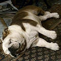 Gladstone. The Dog