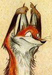 Fox Renard