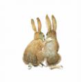 _bunny_m