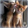 Накахира хозяйственный и любит кошек