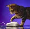 Кошка, которая не ест котят