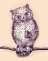 архивные совы