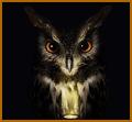 owl-white
