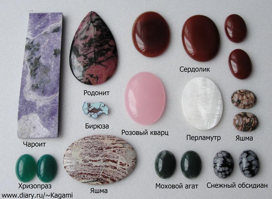 Луковицы растений садовых фото и название русскоязычные поклонники