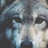 La louve blanche