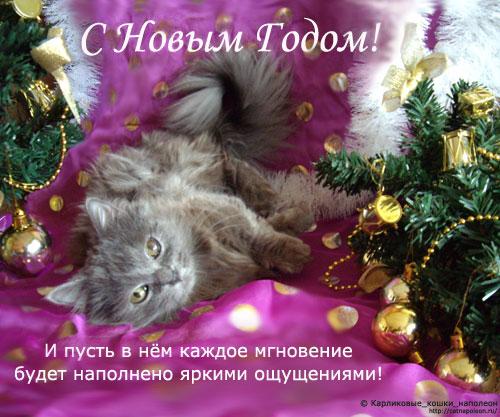 Новогодние поздравления от кота