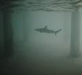 Король Под Водой