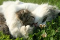 Кошка-мать
