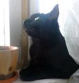 Кот и его бусины