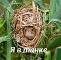 Мышь_полевая