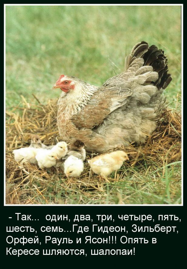 http://static.diary.ru/userdir/3/0/7/2/3072095/77880577.jpg