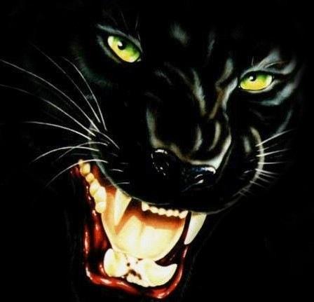 Черная пантера на аву