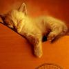 Кошка Вьюшка