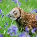 суви у совы