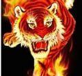 Огненная_Тигрица