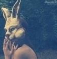 Whye Rabbit