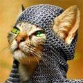warrior_warrior
