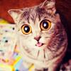Ighis_Catta