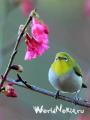 _Птичка на проводе_