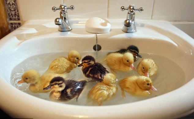 милашка в ванной фото