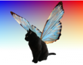 Кошка с крыльями бабочки