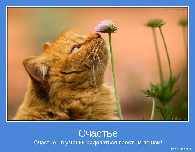 http://static.diary.ru/userdir/3/1/0/6/310620/66881859.jpg