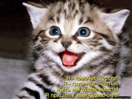 http://static.diary.ru/userdir/3/1/1/1/3111693/80888584.jpg